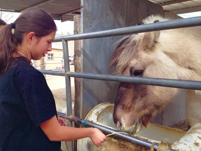 Ashley Munoz, a volunteer with the Santa Clarita Church of Christ, pauses in her volunteer work efforts Sunday to interact with Annabelle, one of the horses at Carousel Ranch. Photo by Jim Holt.