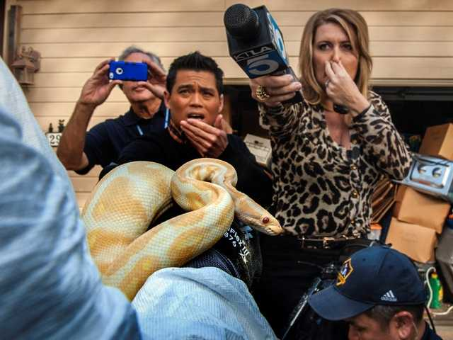 TV reporters including Wendy Burch, of KTLA 5, plug their noses to avoid the stench emanating from the house with hundreds of dead and decaying snakes in Santa Ana.