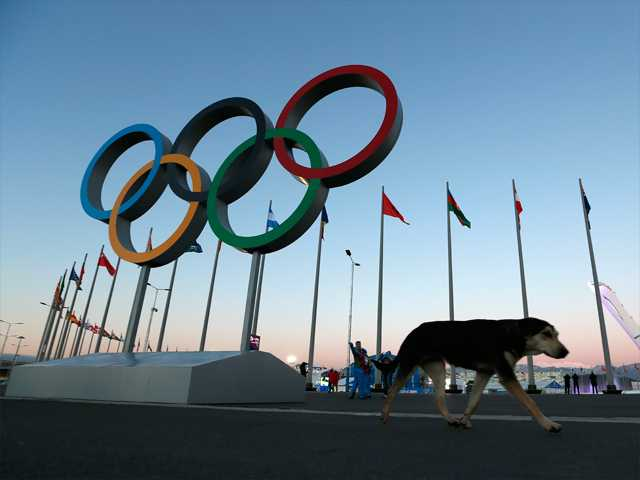 A stray dog walks past the Olympic Rings in Olympic Park on Monday, three days before the start of the 2014 Winter Olympics in Sochi, Russia.