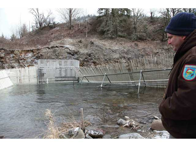 In this photo taken on Tuesday Feb. 4, Hood River hatchery coordinator Chris Brun looks at the weirs recently installed to catch salmon and steelhead returning to the hatchery to spawn in Parkdale, Ore.