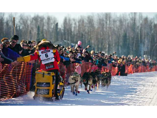 Defending champion Mitch Seavey slaps hands with the crowd at the start of the Iditarod Trail Sled Dog Race on Sunday in Willow, Alaska.