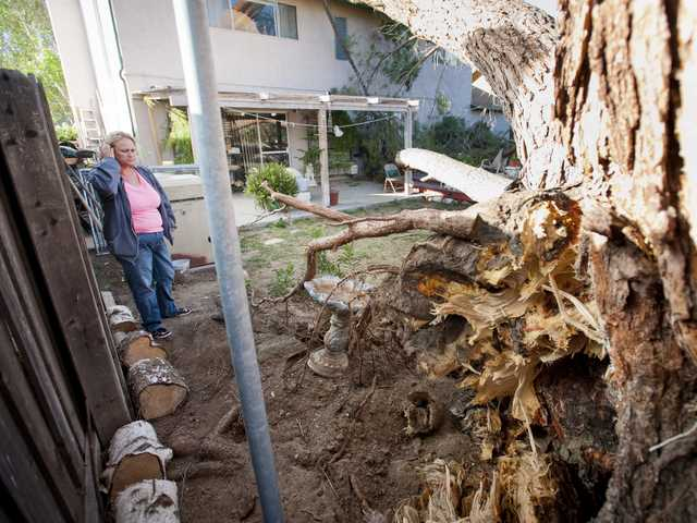 Brandi Hurst looks at the uprooted stump of a pine tree to fell on her house in Saugus on Monday. The house was red-tagged. Signal photo by Charlie Kaijo