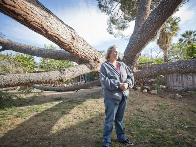 Brandi Hurst looks at property damage to her home from a pine tree that fell on the house Monday in Saugus. Santa Clarita Building and Safety officials said the house is unfit for habitation. Signal photo by Charlie Kaijo