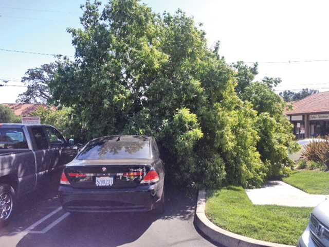 A tree blew down on a car today at Lyons Avenue and Wayman Street in Newhall. Photo courtesy city of Santa Clarita.