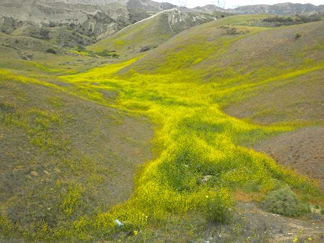 Vasquez Canyon as spring blooms. Courtesy photo/Tedd Baron