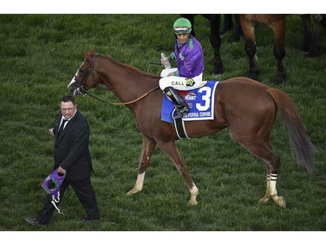 California Chrome wins Preakness