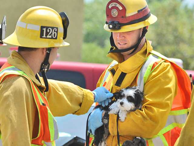 Firefighter Jared Mattison of Fire Station 126 , right, holds a dog that was in one of the three vehicles involved in a collision at the corner of Railroad Avenue and Drayton Street on Saturday. The dog appeared to be uninjured at the scene. Signal photo by Dan Watson.