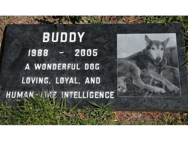 This photo from May 12, 2014, shows a grave marker for Buddy a family pet memorialized at the L.A Pet Cemetery