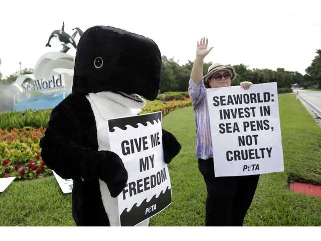 In this April 11, 2014 photo, Christopher Wenzel, left, in whale costume and Carla Wilson, coordinator for the Animal Rights Foundation of Florida, wave signs at passing motorists at the entrance to the Sea World theme park in Orlando, Fla