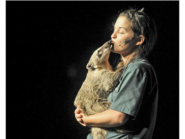 Ryane Parkins, a wildlife educator with the Wildlife Company of Vista, Calif., gets a few kisses from Chia, a coatimundi, during the company show Wednesday at Golden Valley High School. The show was part of the Santa Clarita Public Library's summer reading program. Signal photo by Katharine Lotze