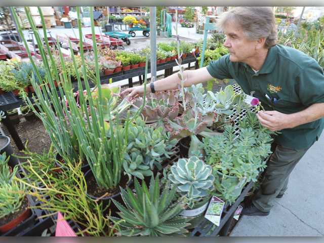 Local arborist gives tips for watering wisely during drought