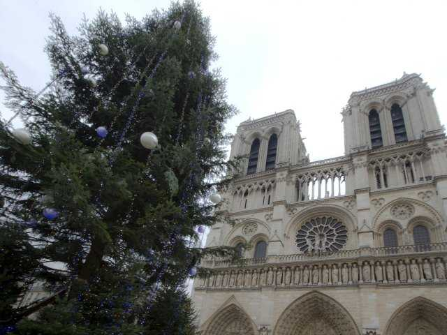 Who's behind Christmas tree at Paris' Notre Dame?