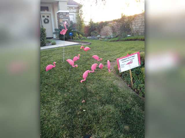 The gift of flocking