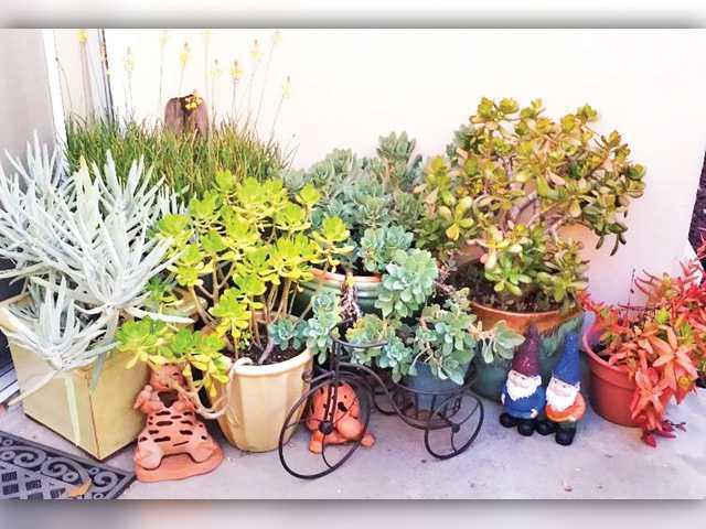 Succulent plants: a win-win