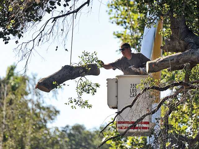 Part of oak tree falls on Newhall home
