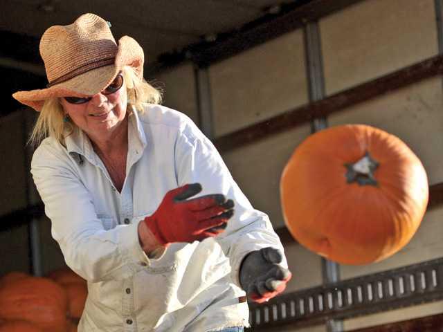 Nancy's Ranch opens pumpkin patch Saturday