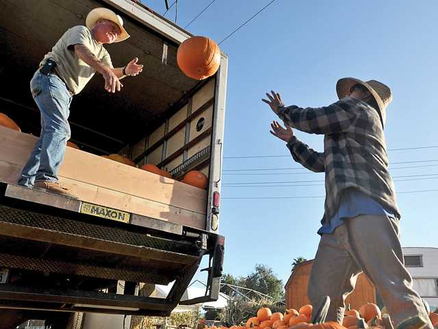 Nancy's Ranch opens pumpkin patch Saturday
