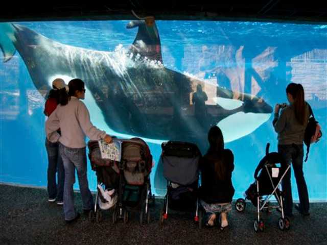 People pack meeting of panel eyeing expansion of whale tanks