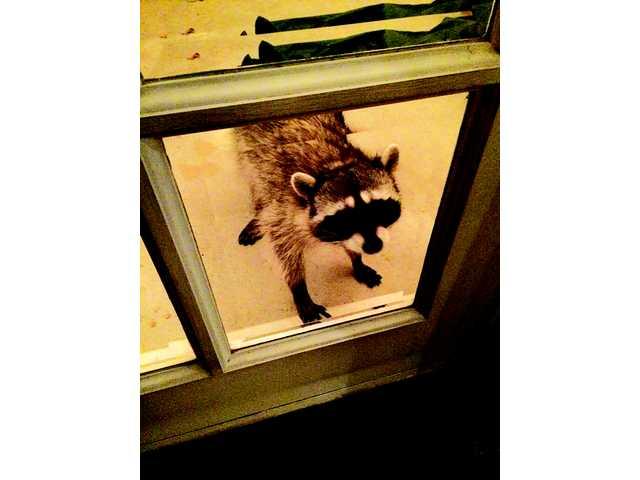 Back Door Visitor