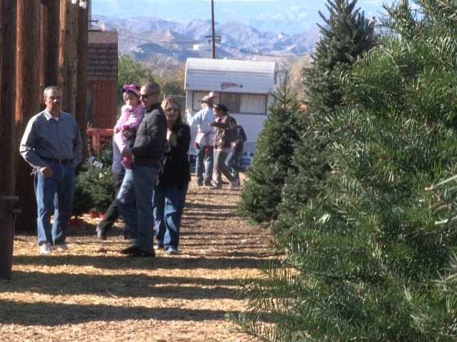 Loyal customers kickstart Christmas at Nancy's Ranch Christmas tree farm