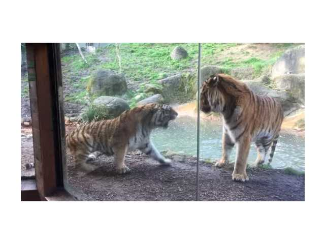 Have You Seen This? Don't wake the tiger