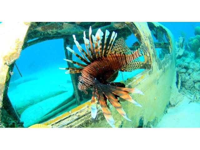Florida will host competition to kill invasive lionfish