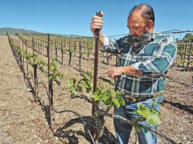 County may lift restrictions on wine industry