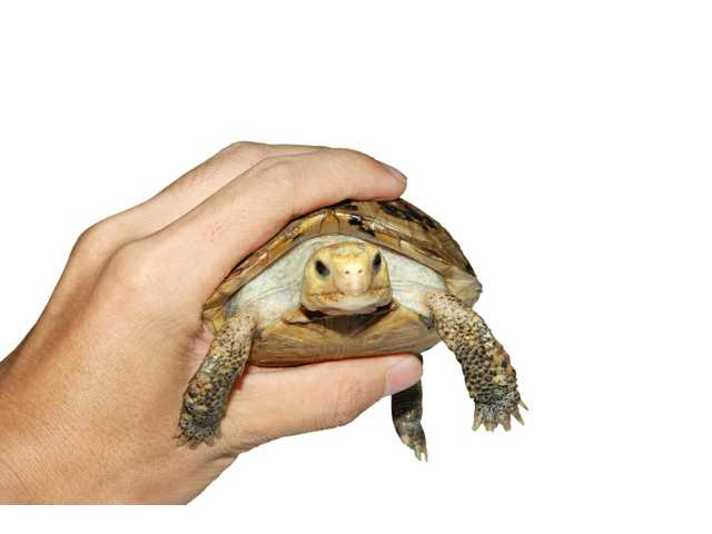 Q Fever Reptiles Turtles, frogs and oth...