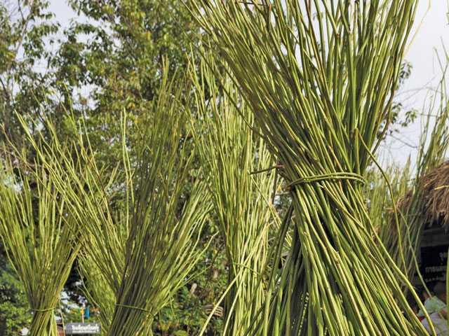 Harvested hemp stalks. iStock photo