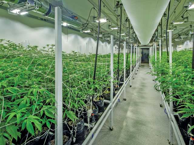 Special Report: Commercial Grow Houses Pay Above-Market Lease Rates