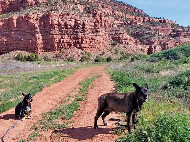 Michelle Sathe: Road trip tips for you & Fido