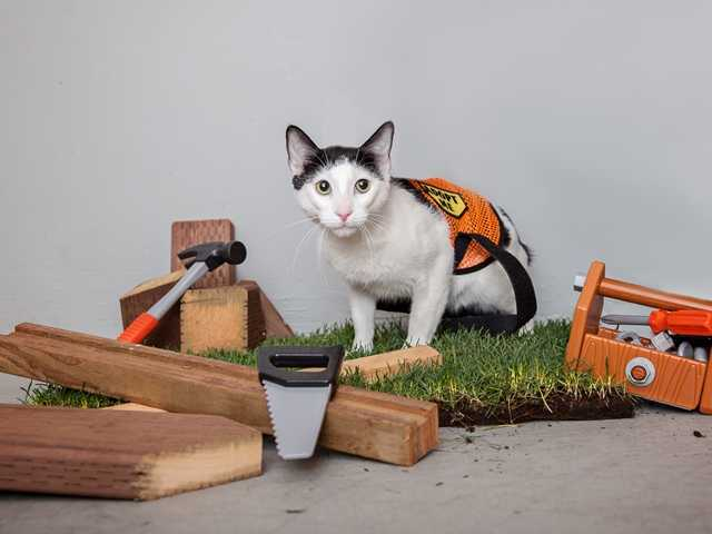 Felines find new life as working cats