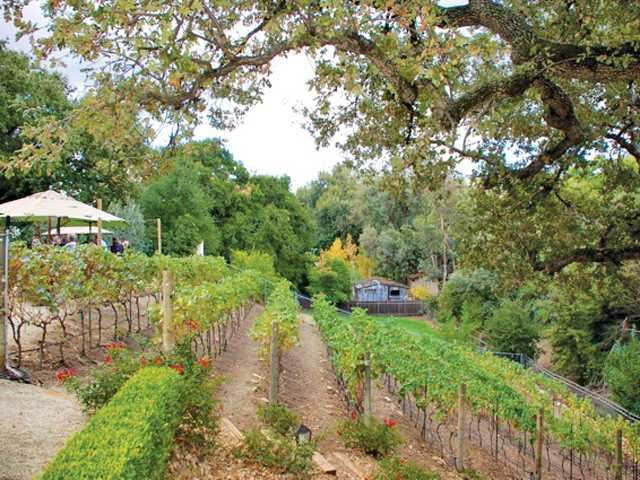 Compa Vineyward in Newhall, privately owned by Jeannie, Chris and Tim Carpenter. Courtesy photo