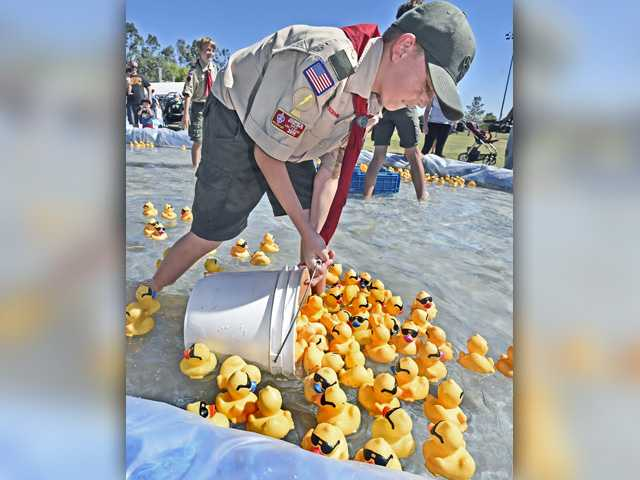 Boyscout Emory Hinze, 11, of troop 609-Nehwall scoops up the finishers of the first race at the 14th Annual Rubber Ducky Festival to benefit the Samuel Dixon Family  Health Center held at Bridgeport Park in Valencia on Saturday.  Dan Watson/The Signal