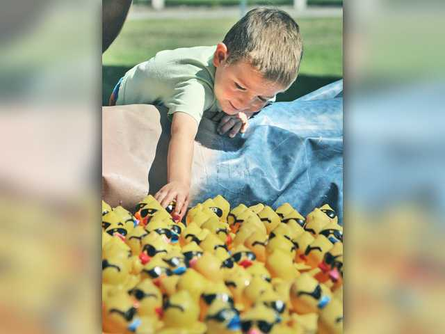 Maxwell DelVecchio, 2, picks out a duck in the holding pond before the first race at 14th Annual Rubber Ducky Festival to benefit  the Samuel Dixon Family  Health Center held at Bridgeport Park in Valencia on Saturday.  Dan Watson/The Signal