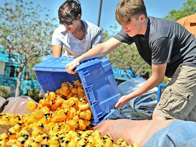 Volunteers Greg Garcia, 16, left, and Cole Umland, 17, pour some of the two-thousand rubber ducky racers into the holding pond before the first race at the 14th Annual Rubber Ducky Festival to benefit  the Samuel Dixon Family  Health Center held at Bridgeport Park in Valencia on Saturday.  Dan Watson/The Signal