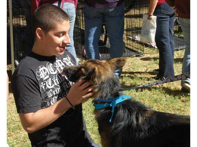 A young man picks out a dog to adopt at the 2008 fair; over six LA County animal shelters provide dogs and cats for adoption each year at Bow-Wows & Meows.