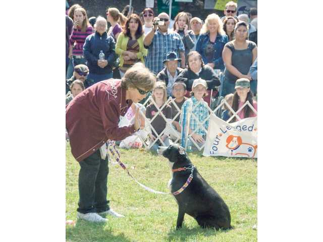 """Santa Clarita City Councilmember Marsha McLean prompts her dog, Babbette, for a """"high-five,"""" before she presses the """"easy button"""" on the grass during the Stupid Pet Trick competition at the Bow-Wows & Meows Pet Fair at Hart Park Sunday."""