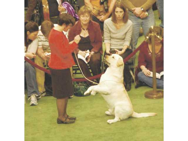 Julie Musella with Monty at Westminster dog show.