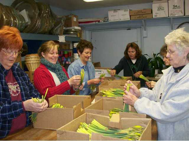 Daffodil Days 2008 volunteers prepare daffodil orders. During that campaign, some $40,000 was raised for the American Cancer Society. This year's goal is $50,000.