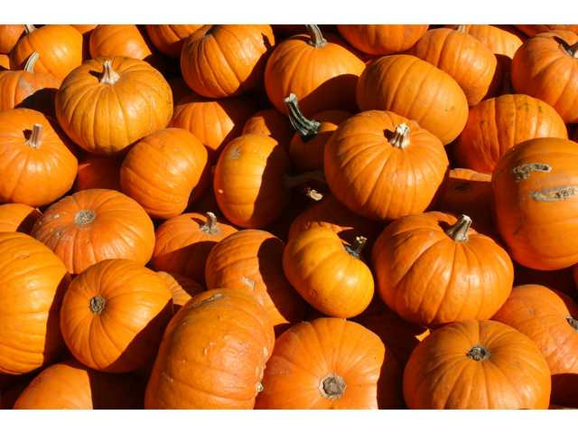 A pile of pumpkins at Lombardi Ranch in Saugus awaits the carving knives of Santa Clarita Valley residents.