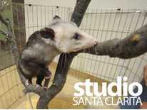 Studio Santa Clarita: Meet Chester; Jam Sesh