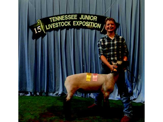 Barnes succeeds at 4-H Sheep Show