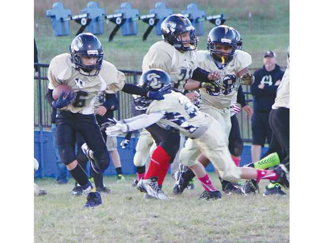 Senior Tigers to battle for conference title