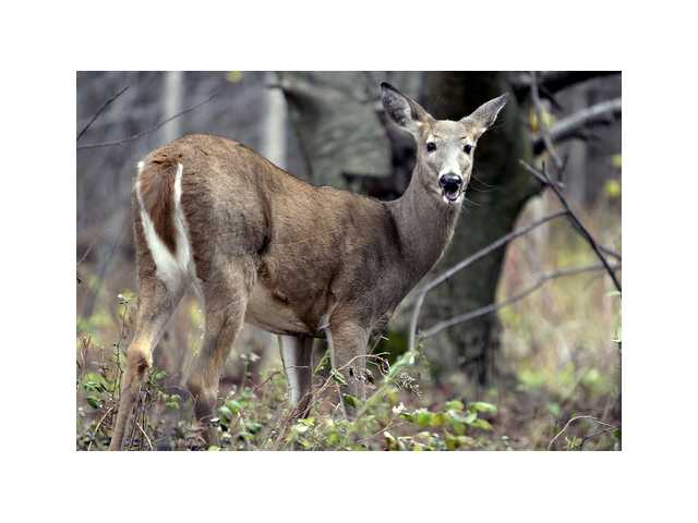 Antlerless deer hunting available on private land in Unit L counties in Jan.