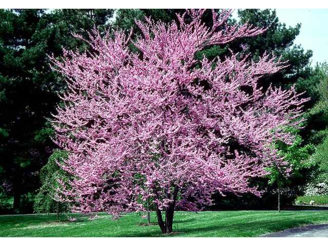 100K Tree Day set for Feb. 25