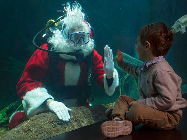 Sandy Claws, Furry Paws and SCUBA Claus