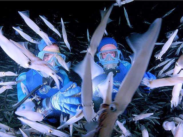 Dive Into 'Jean-Michel Cousteau's Secret Ocean 3D'