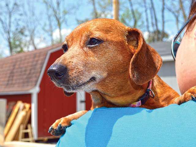 Dog survives breast cancer, seeks home