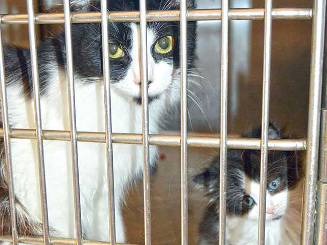 Animal Control overrun with 116 cats